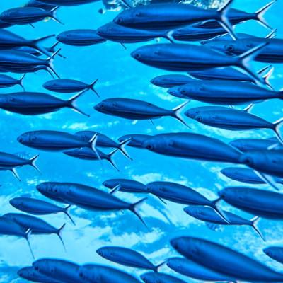 Programa de Monitoramento da Atividade Pesqueira da Bacia de Santos (PMAP–BS)