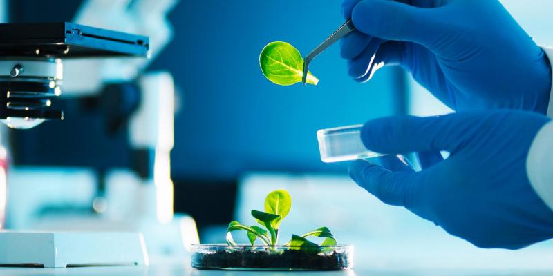 Artigo: Como transformar conhecimento científico em inovação?