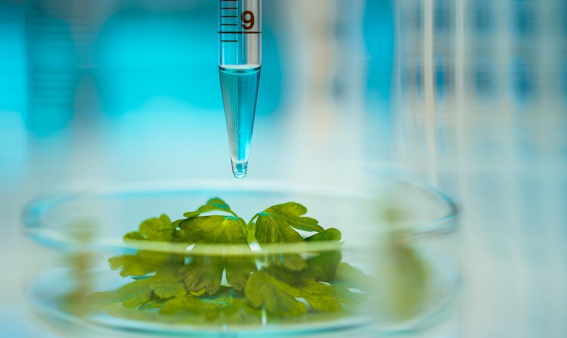Imagem:  Fundepag anuncia reposicionamento estratégico para potencializar inovação no agronegócio