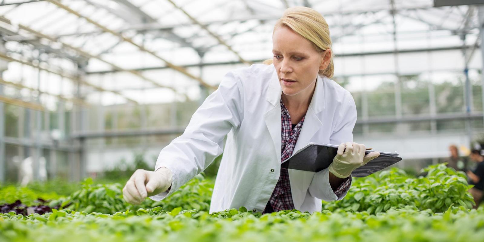 Imagem: Artigo: Por que a inovação é fundamental para uma agricultura mais sustentável?