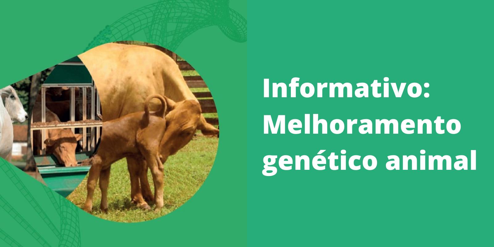 Imagem: Informativo: Melhoramento genético