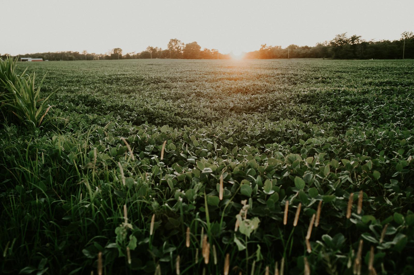 Imagem: Transferência de tecnologia: Biotecnologia de cultura da soja terá exploração comercial